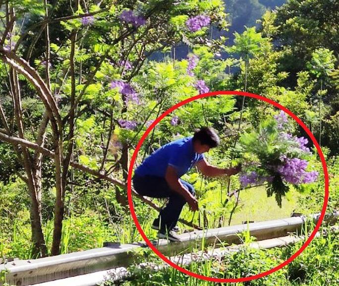 Người đàn ông bẻ hoa phượng tím tuyệt đẹp ở Đà Lạt khai gì? - Ảnh 1.