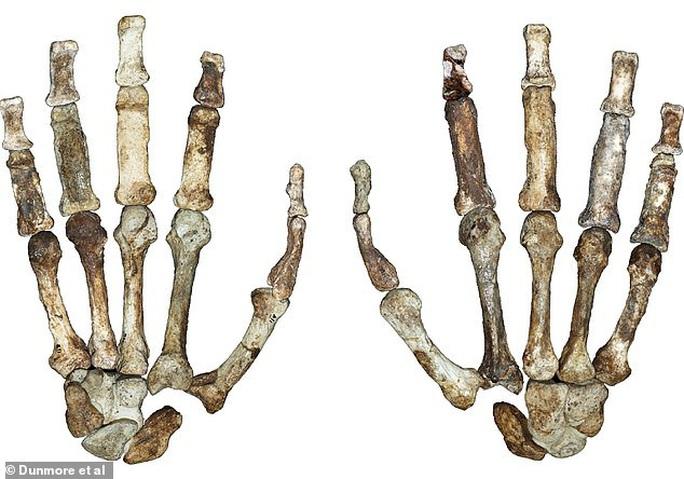 Bí ẩn sinh vật 2 triệu tuổi mang bàn tay của con người - Ảnh 2.