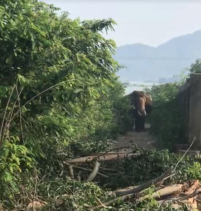 Voi nhà ở Đắk Lắk húc chết người: Nạn nhân đã chăm sóc voi 4 năm - Ảnh 2.