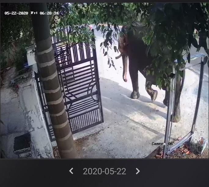 Voi nhà ở Đắk Lắk húc chết người: Nạn nhân đã chăm sóc voi 4 năm - Ảnh 3.