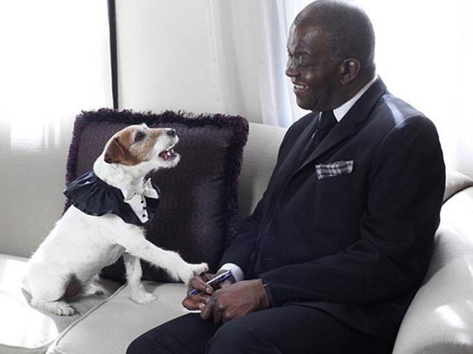 Chết hơn 5 năm, chó Uggie vẫn thắng giải thưởng diễn xuất - Ảnh 5.