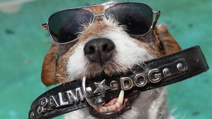 Chết hơn 5 năm, chó Uggie vẫn thắng giải thưởng diễn xuất - Ảnh 1.