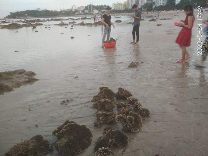 Lên án hành vi hủy hoại san hô vịnh Nha Trang - Ảnh 1.