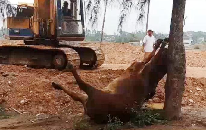 Hai người lạ xuất hiện, 4 con bò bỗng lăn ra chết bất thường - Ảnh 1.