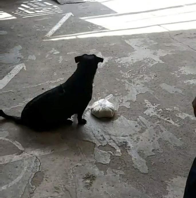 """CLIP: """"Rụng tim"""" với chú chó xoáy Phú Quốc thay chủ tật nguyền xếp hàng nhận gạo - Ảnh 2."""