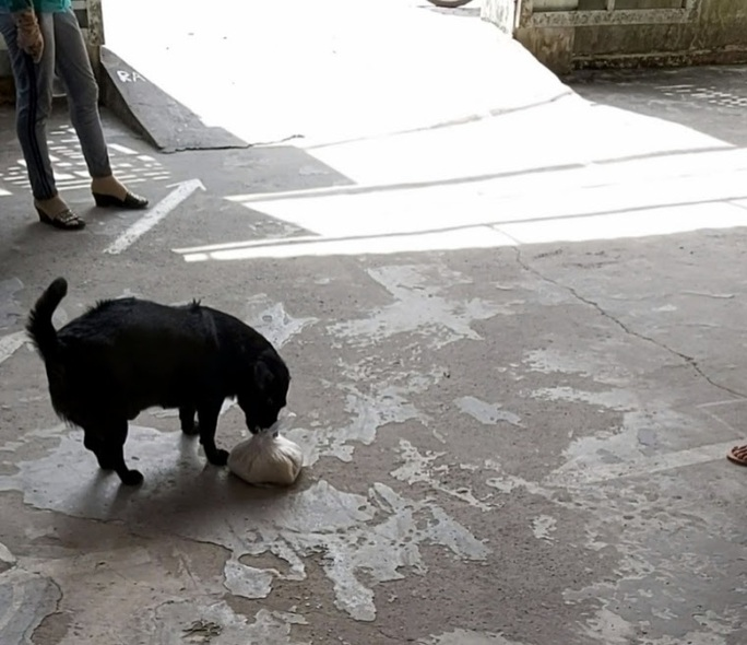 """CLIP: """"Rụng tim"""" với chú chó xoáy Phú Quốc thay chủ tật nguyền xếp hàng nhận gạo - Ảnh 3."""