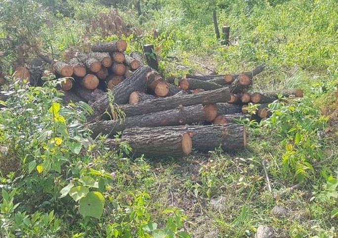 Clip, ảnh cận cảnh hơn 4 ha rừng phòng hộ bị chặt phá tan hoang cách UBND xã 1 km - Ảnh 6.