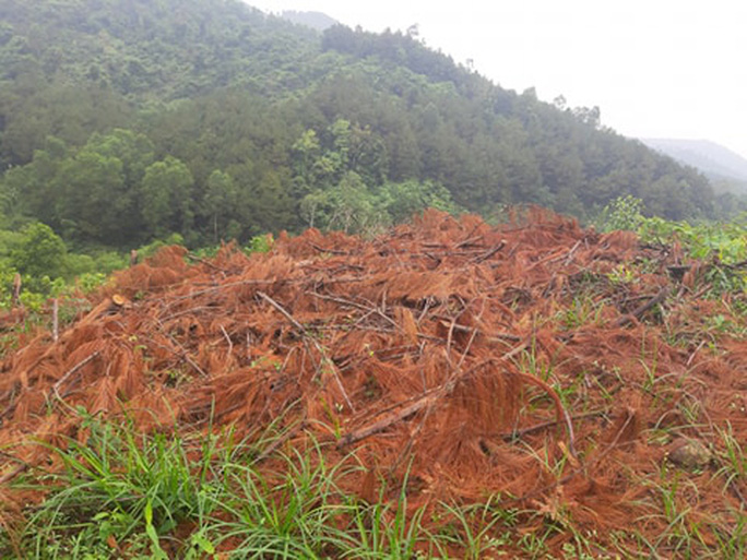 Clip, ảnh cận cảnh hơn 4 ha rừng phòng hộ bị chặt phá tan hoang cách UBND xã 1 km - Ảnh 8.