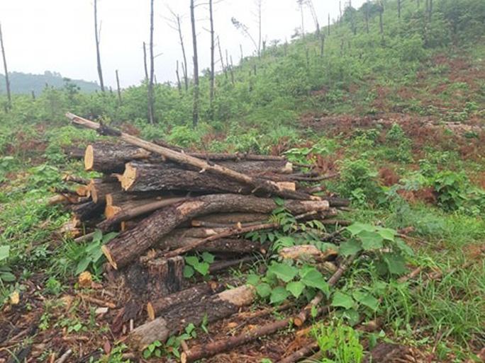 Clip, ảnh cận cảnh hơn 4 ha rừng phòng hộ bị chặt phá tan hoang cách UBND xã 1 km - Ảnh 7.