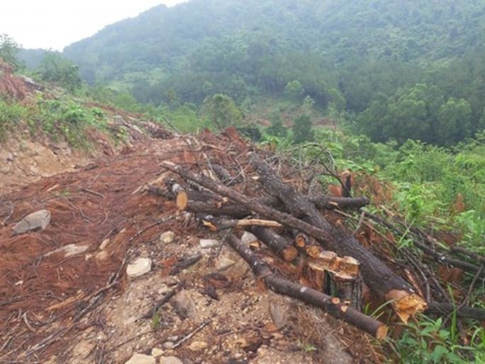 Clip, ảnh cận cảnh hơn 4 ha rừng phòng hộ bị chặt phá tan hoang cách UBND xã 1 km - Ảnh 10.