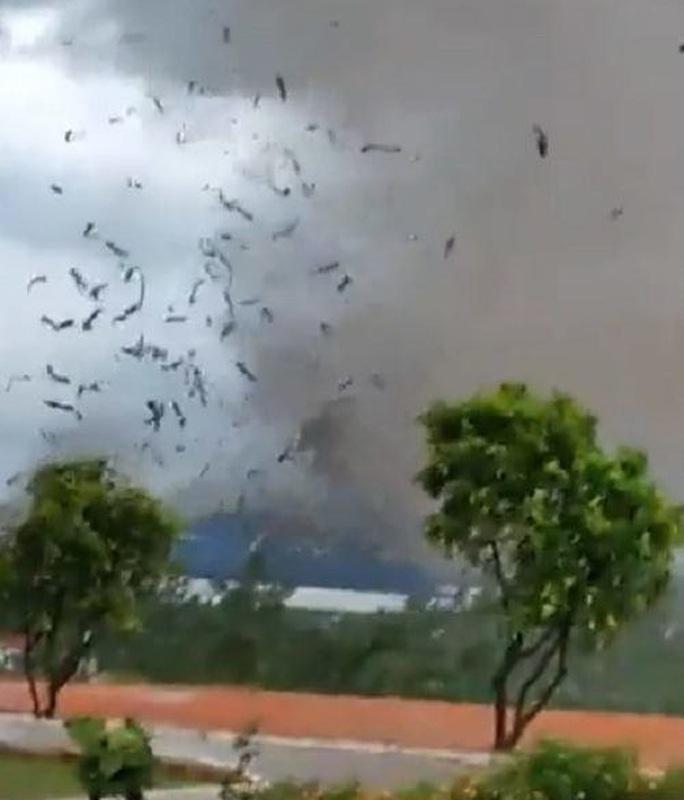 CLIP: Lốc xoáy kinh hoàng kéo sập xưởng gỗ, 3 người tử vong - Ảnh 2.
