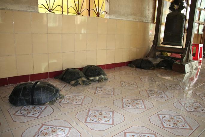 CLIP: Về miền Tây gặp cụ rùa trên 128 tuổi thích ăn chay, nghe kinh Phật - Ảnh 5.