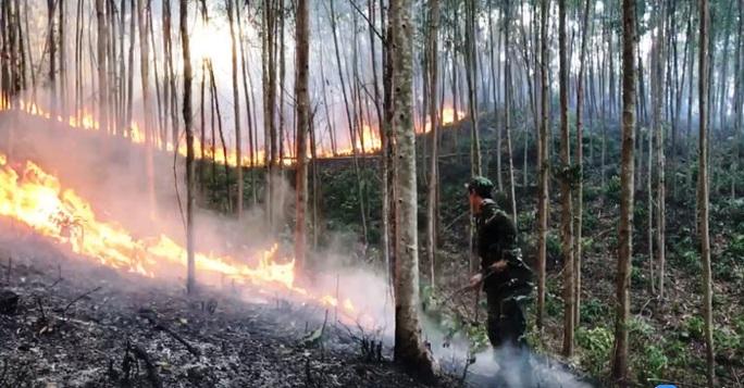 Chặn cháy rừng nhờ ảnh vệ tinh - Ảnh 2.