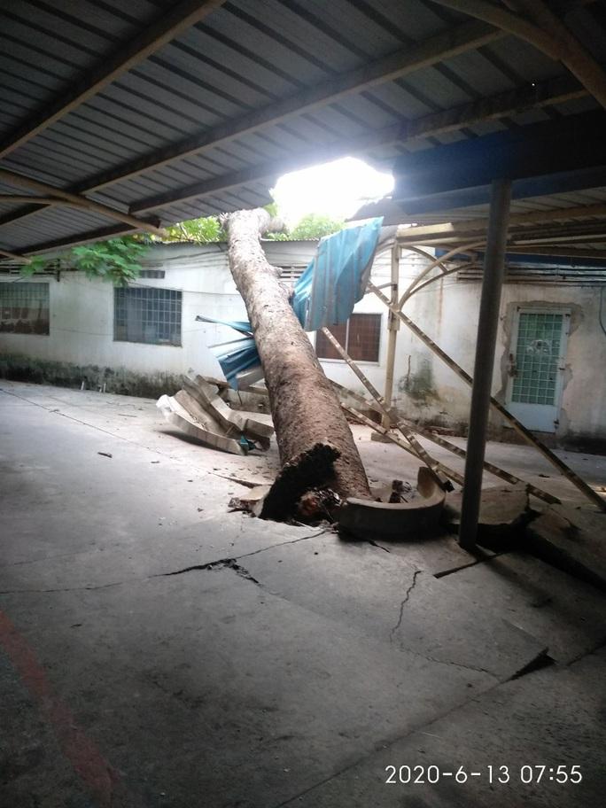 Cây xanh ngã đổ trong đêm - Ảnh 5.
