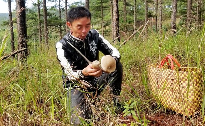 Kỳ thú săn nấm rừng thông Đà Lạt - Ảnh 3.