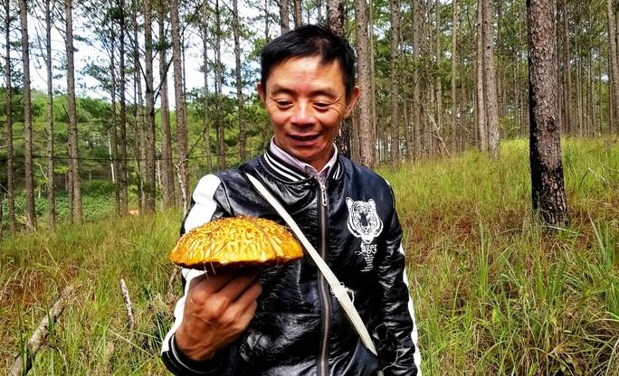 Kỳ thú săn nấm rừng thông Đà Lạt - Ảnh 11.