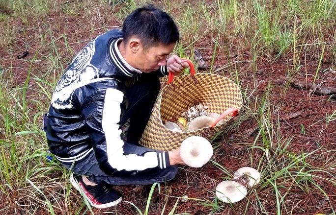 Kỳ thú săn nấm rừng thông Đà Lạt - Ảnh 4.