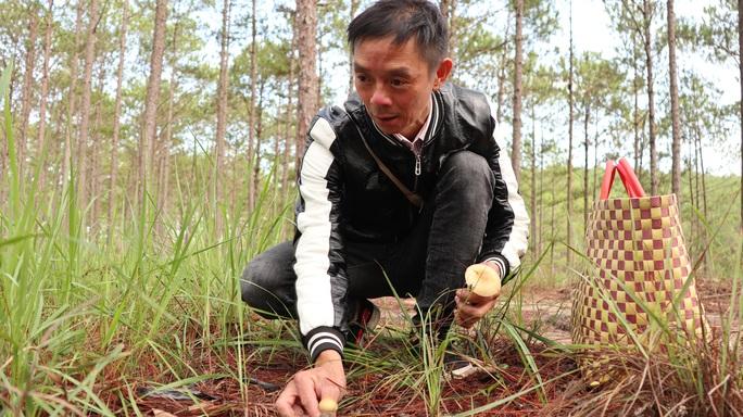 Kỳ thú săn nấm rừng thông Đà Lạt - Ảnh 8.