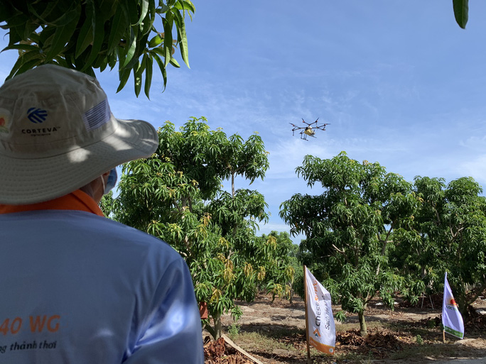 Người dân thích thú khi lần đầu tiên Khánh Hòa dùng máy bay phun phân bón - Ảnh 6.