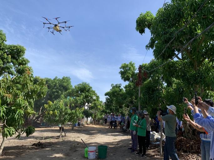 Người dân thích thú khi lần đầu tiên Khánh Hòa dùng máy bay phun phân bón - Ảnh 5.