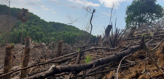 Khởi tố vụ phá rừng đầu nguồn thủy điện - Ảnh 1.