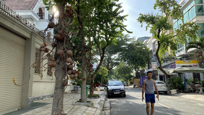 Xâm hại cây rồi trồng lại theo... phong thủy - Ảnh 1.