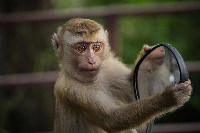 Khỉ nghiện rượu tấn công 250 người bị kết án chung thân - Ảnh 1.