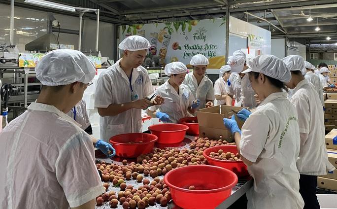 Vải thiều Việt Nam vừa đến Nhật Bản đã được mua sạch  - Ảnh 2.