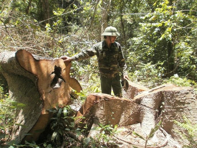 Một cơn bão xóa sổ... 7.000 ha rừng ở Đắk Lắk !? - Ảnh 1.
