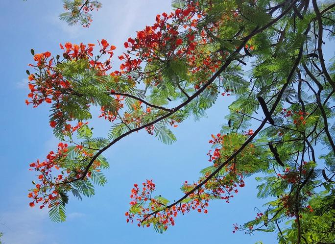 Giới trẻ Sài Gòn truyền tai nhau trải nghiệm con đường mùa hè đẹp nhất thành phố biển Vũng Tàu - Ảnh 8.