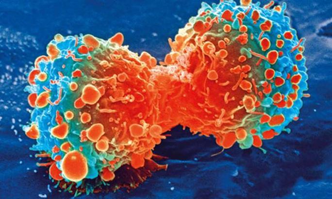 Phát hiện thứ ngay trong cơ thể khóa được ung thư gan - Ảnh 1.