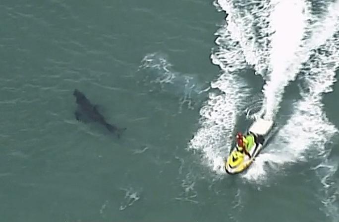 Đụng cá mập trắng khổng lồ, người đàn ông 60 tuổi chết thảm - Ảnh 1.