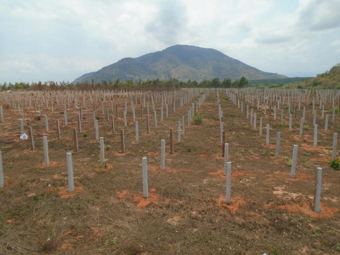 Bình Thuận: Yêu cầu lập chuyên án điều tra vụ đầu độc Khu bảo tồn Tà Cú  - Ảnh 2.