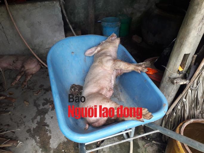 Mật phục bắt chủ trang trại bán cho dân con giống nhiễm dịch tả heo châu Phi  - Ảnh 4.