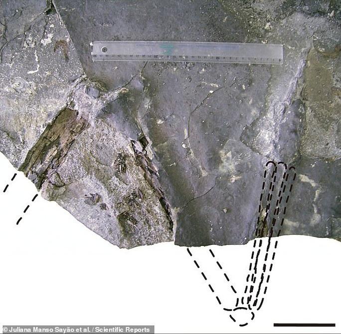 Khai thác đá, đụng độ tổ tiên quái thú không cánh và hung ác của loài chim - Ảnh 3.