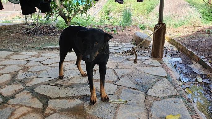 Hai con báo đen xuất hiện gần khu dân cư ở Đồng Nai có thể chỉ là… chó lai! - Ảnh 2.