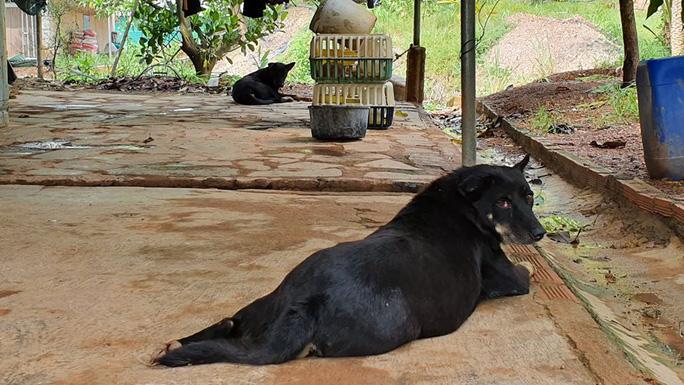 Hai con báo đen xuất hiện gần khu dân cư ở Đồng Nai có thể chỉ là… chó lai! - Ảnh 1.