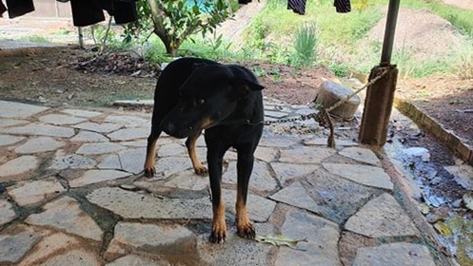 Hai con báo đen xuất hiện gần khu dân cư ở Đồng Nai có thể chỉ là… chó lai! - Ảnh 3.