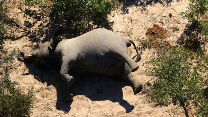 Hơn 350 con voi chết bí ẩn ở Nam Phi - Ảnh 3.
