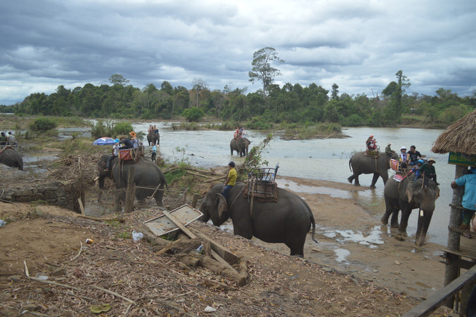 Đang cưỡi voi, 3 mẹ con rớt xuống đất, 1 người bị thương nặng - Ảnh 1.