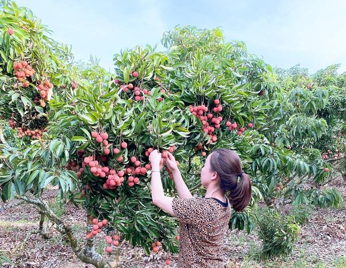 Trái cây Việt Nam rộng cửa sang Nhật - Ảnh 1.