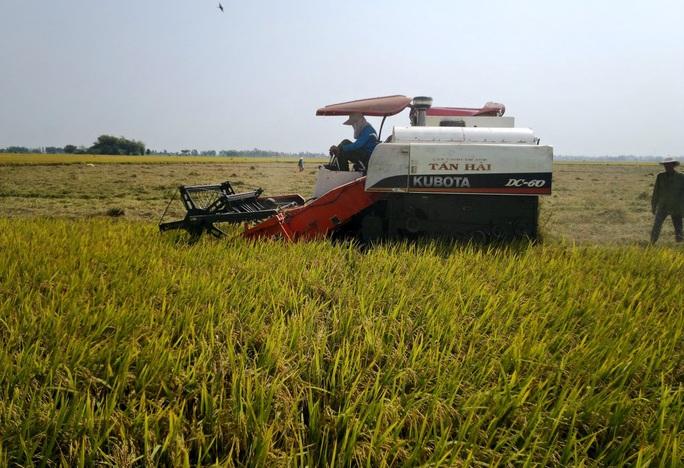 """NÔNG DÂN MIỀN TÂY BẮT TAY LÀM """"NGƯỜI TỬ TẾ"""" (*): Gầy dựng thương hiệu cho nông sản - Ảnh 3."""