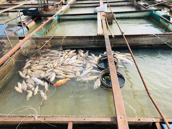Cá bè lại chết hàng loạt trên sông Đồng Nai - Ảnh 2.