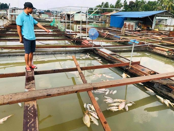 Cá bè lại chết hàng loạt trên sông Đồng Nai - Ảnh 1.