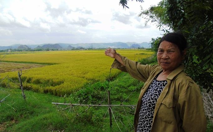 Cánh đồng ở xã Quảng Trường (nay xã Liên Trường, huyện Quảng Trạch) - nơi Báo Người Lao Động từng phản ánh có tình trạng côn đồ hành hung chủ máy gặt, tranh dành