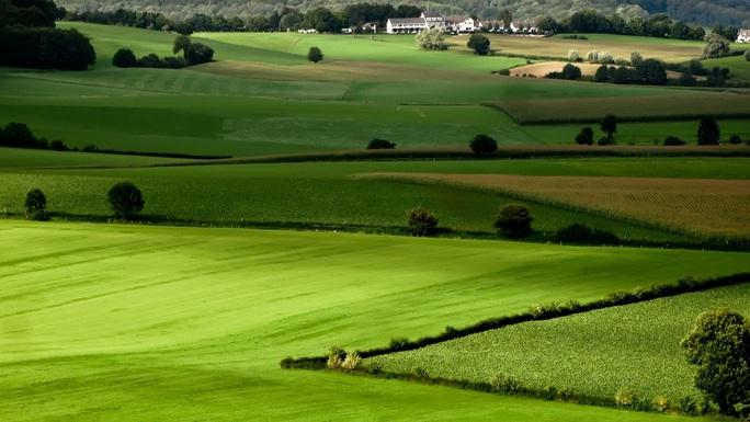 Cán bộ, công chức mua đất trồng lúa sẽ bị phạt đến 5 triệu đồng - Ảnh 1.