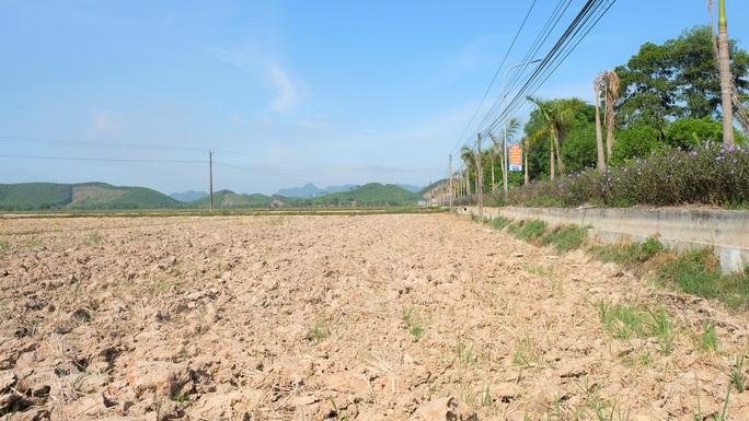 Hàng ngàn ha ruộng bỏ không vì nắng hạn kỷ lục kéo dài - Ảnh 1.