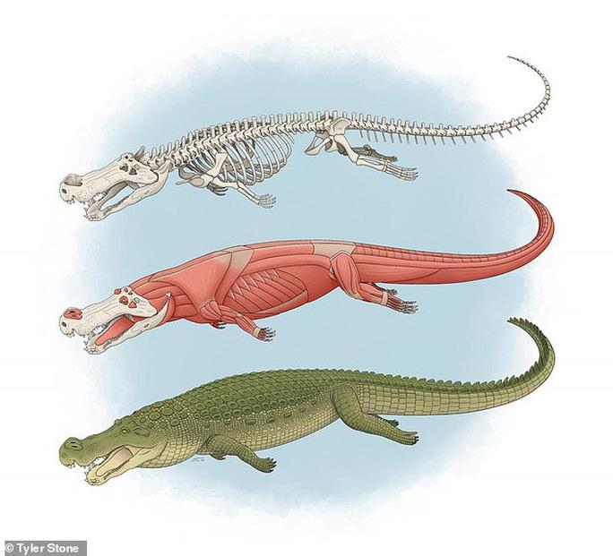 Sốc với quái vật ăn khủng long, răng bằng trái chuối, con cháu còn tồn tại - Ảnh 1.