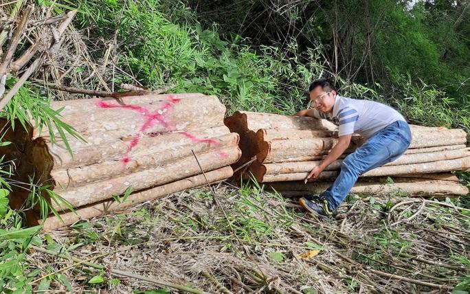 Kiểm tra thông tin rừng bị triệt hạ ở khu vực biên giới - Ảnh 2.