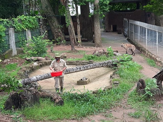 Cận cảnh hàng tấn rau, quả hỗ trợ thú ở Thảo Cầm Viên - Ảnh 5.